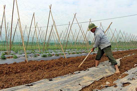 Nông dân Bàu Tròn (xã Đại An) chuẩn bị các điều kiện cần thiết để vào vụ sản xuất mới. Ảnh: N.DUY