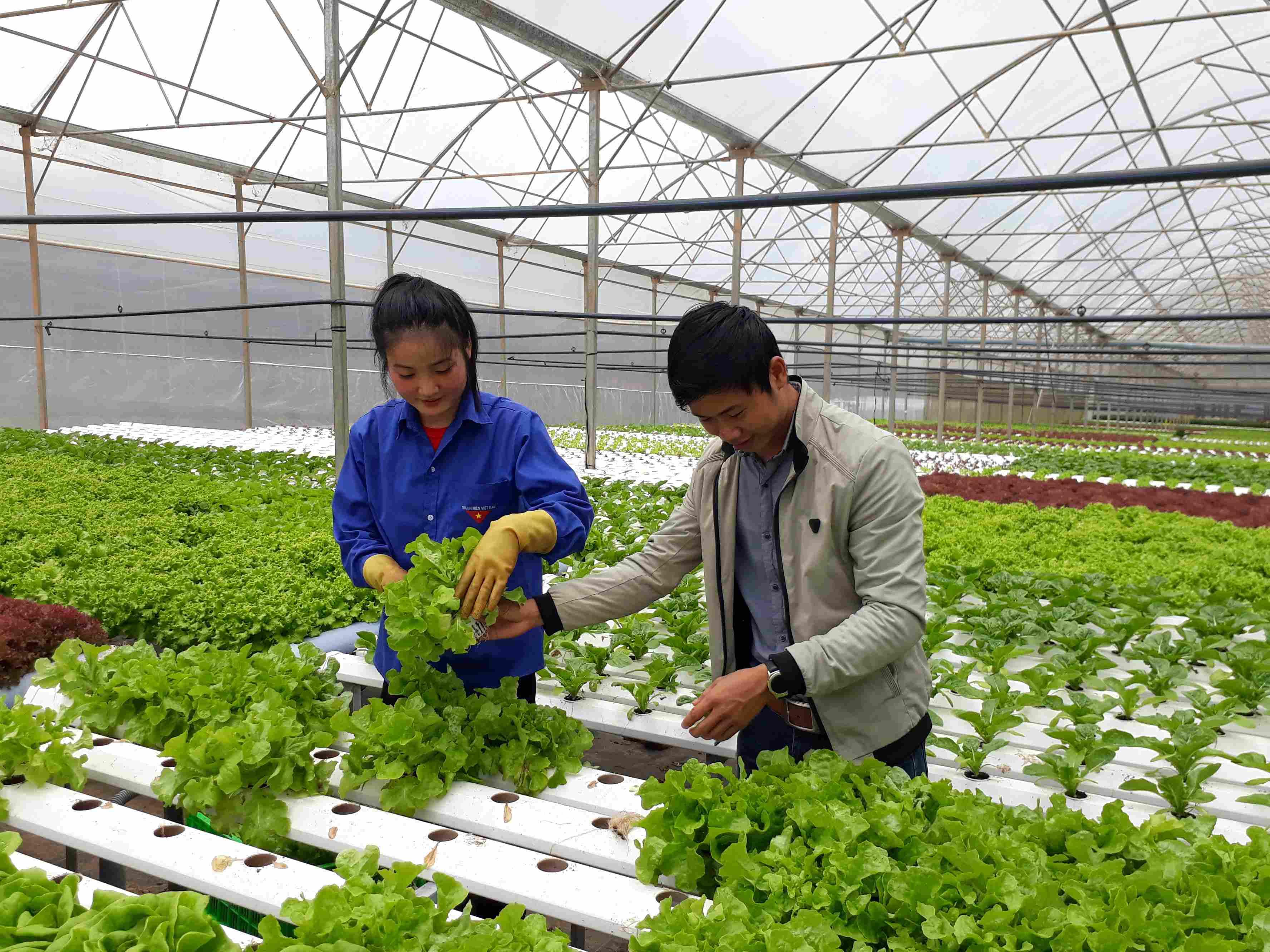 Các mô hình nông nghiệp ứng dụng công nghệ cao tại Lâm Đồng rất phát triển. Ảnh: Q.T