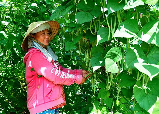 Nông dân xã Đại An thu 140 - 180 triệu đồng/ha/năm từ việc sản xuất cây trồng cạn theo phương thức hàng hóa. Ảnh: T.R
