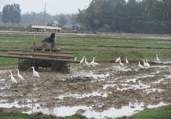 Nông dân Núi Thành làm đất vào vụ đông xuân. Ảnh: Văn Phin