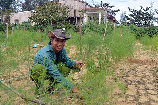 Ông Phạm Ba với mô hình trồng măng tây xanh tại Điện Dương. Ảnh: K.LINH
