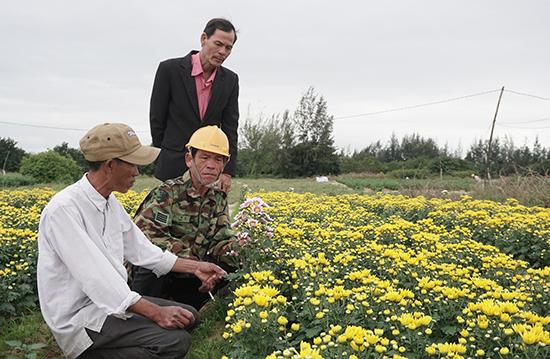 Nông dân khối phố 5, phường Điện Trung Nam trao đổi kinh nghiệm trồng hoa cúc. Ảnh: NHƯ TRANG