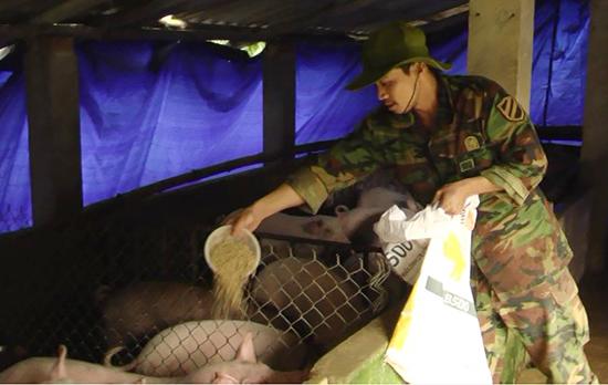 Anh Nguyễn Đức Đông đang chăm sóc đàn heo thịt.