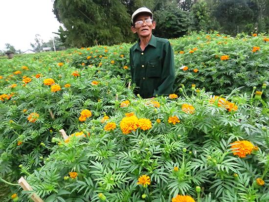 Vựa hoa Hà Đông khoe sắc đón Tết. Ảnh: TRIÊU NHAN