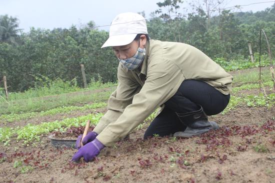 Rau sạch hoàn toàn được trồng bằng phương pháp thủ công và dùng phân hữu cơ.