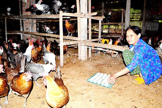 Bà Lê Thị Lý tập hợp trứng gà Ai Cập để bán. Ảnh: V.Q