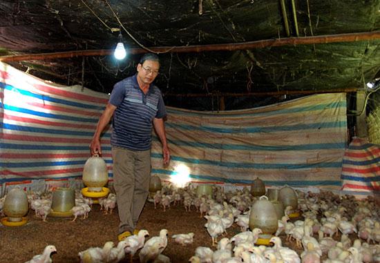Khu vực dành cho gà con mới nhập về được đầu tư trang thiết bị hiện đại. Ảnh: Hồ Quân