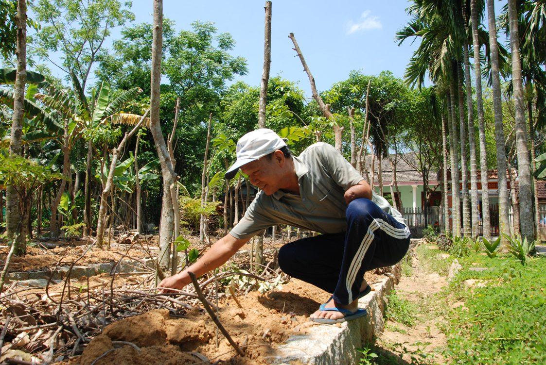 Ảnh: Mô hình vườn kiểu mẫu của CCB cựu chiến binh Lê Quang Châu đang mang lại nhiều tín hiệu tích cựcbắt đầu cho thu nhập ổn định. Ảnh: HỒ QUÂN