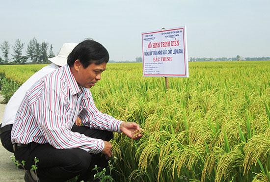 Tham quan mô hình sản xuất giống lúa thuần Bắc Thịnh tại xã Duy Thành (Duy Xuyên) sáng qua 19.4.