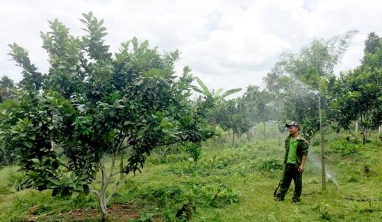 Anh Thọ đầu tư hệ thống nước tự động hết 30 triệu đồng cho vườn bưởi của mình. Ảnh: PHAN VINH