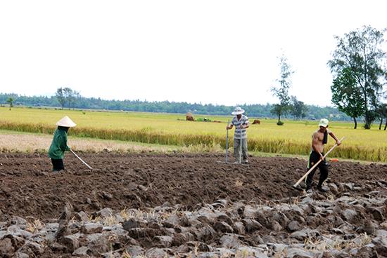 Người dân Thăng Bình đang tích cực làm đất để làm vụ xuân hè.