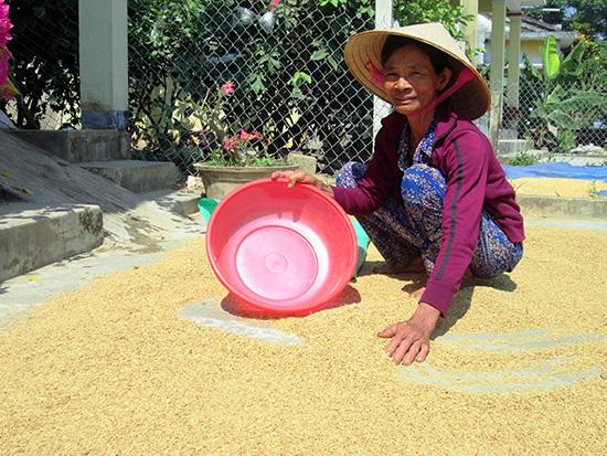 Với những đầu mối tiêu thụ lớn, hy vọng đầu ra của sản phẩm lúa gạo sẽ tiếp tục ổn định.Ảnh: VĂN SỰ