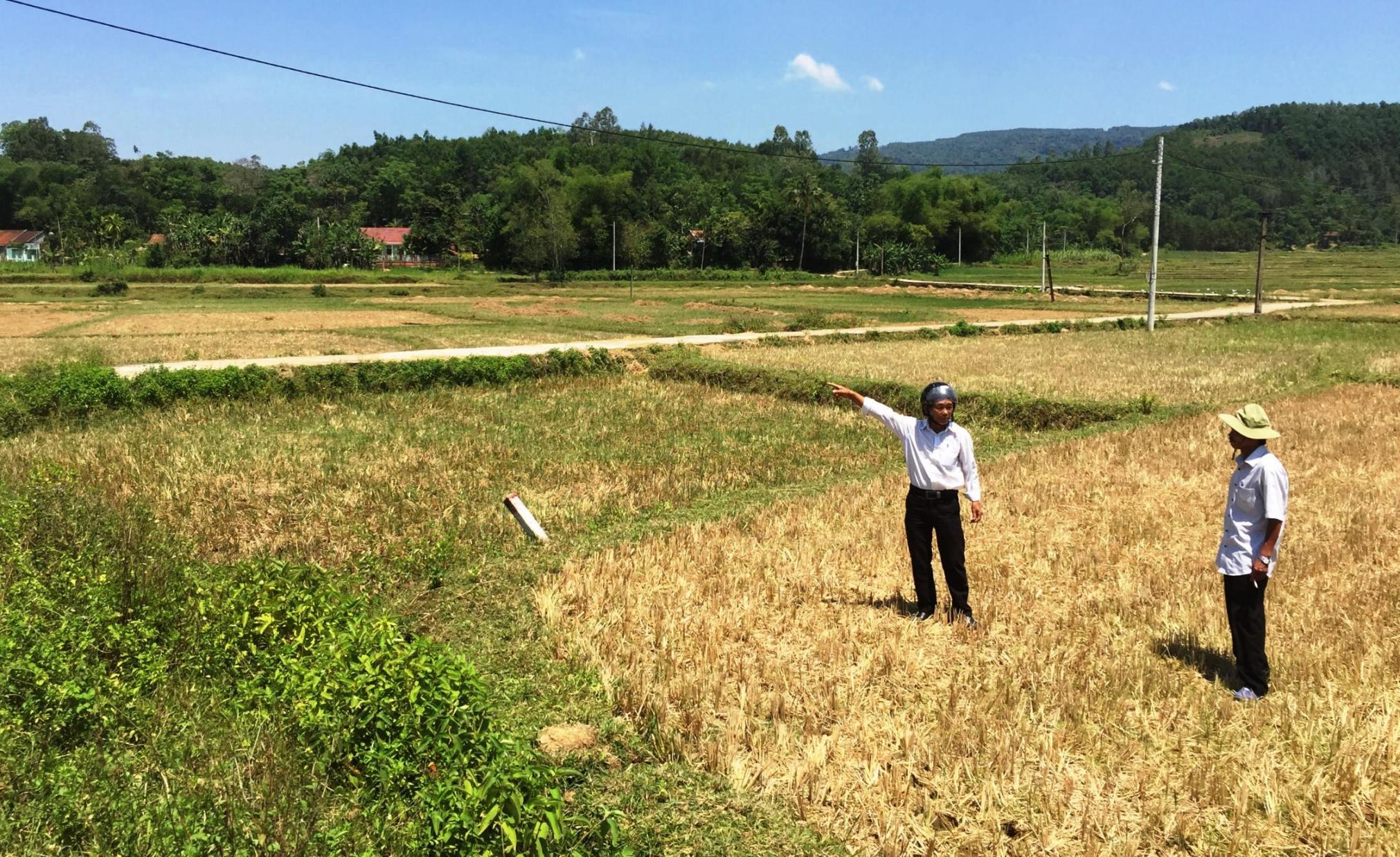 Người dân cho rằng, bỏ hoang 60ha đất canh tác trong vụ hè thu là lãng phí. Ảnh: PHAN VINH