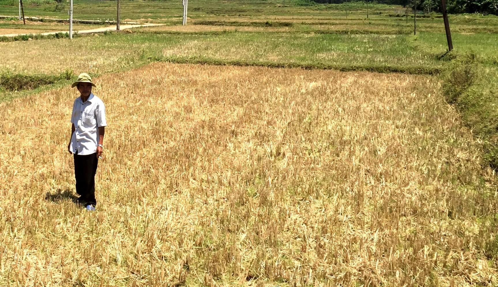 Xã Bình Lãnh có đến 60/372ha diện tích đất canh tác không chủ động nước tưới.. Ảnh: PHAN VINH