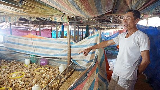 Cựu chiến binh Phùng Tấn Trưng làm kinh tế giỏi với mô hình trang trại gà hơn 8000 con