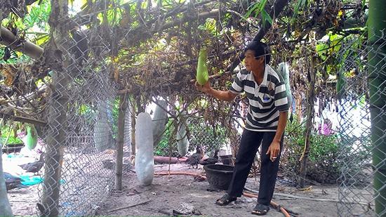Vườn bí sạch của ông Hoạch, mô hình đem lại hiệu quả kinh tế cao nhất ở xã Tam Hòa.