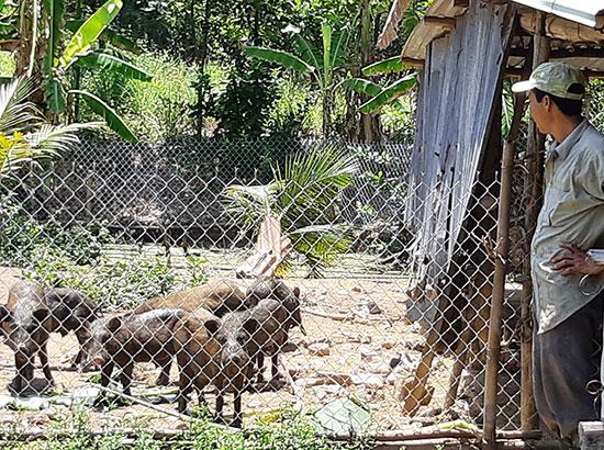 Mô hình vườn - ao - chuồng trên đất lúa kém hiệu quả của anh Phong (Đại Đồng) cho thu nhập khá.
