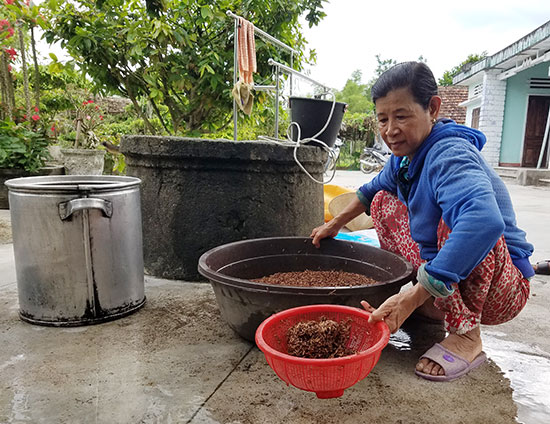 Nông dân Bình Quý chuẩn bị lúa giống hữu cơ để xuống giống vụ hè thu tới. Ảnh: Q.T