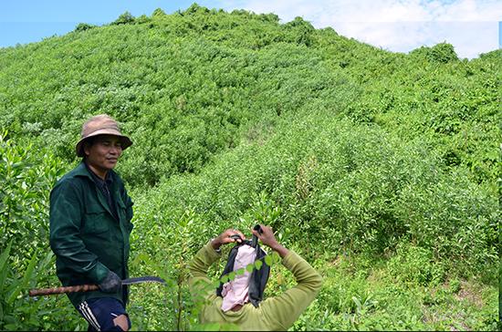 Ở nhiều địa phương miền núi, đất quy hoạch cho rừng sản xuất tăng nhiều, trong khi diện tích rừng phòng hộ quy hoạch lại giảm.