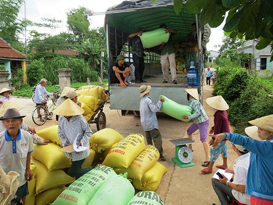 Bình quân mỗi năm nông dân trên địa bàn tỉnh hợp tác với các doanh nghiệp sản xuất 3.500 - 4.000ha giống lúa hàng hóa.Ảnh: VĂN SỰ