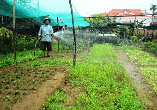 Sản xuất rau hữu cơ ở làng Thanh Đông, xã Cẩm Thanh, Hội An. Ảnh: L.QUÂN
