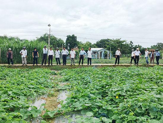Các đại biểu tham quan mô hình sản xuất dưa gang an toàn tại xã Tam Ngọc (TP.Tam Kỳ) sáng qua 14.8. Ảnh: N.S