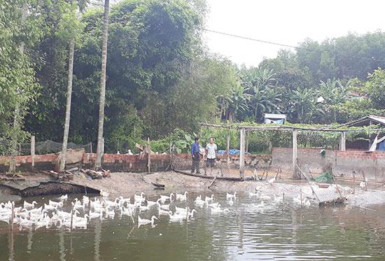 Mô hình vườn - ao của ông Huân cho thu nhập khoảng 150 triệu đồng mỗi năm.
