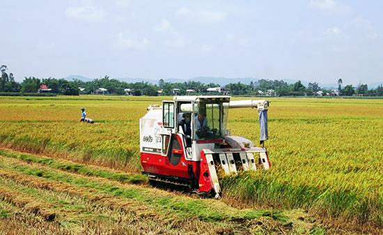 Nhờ ứng dụng đồng bộ cơ giới hóa, sản xuất lúa ở Đại Hiệp luôn đảm bảo khung thời vụ, nâng cao giá trị kinh tế. Ảnh: D.S