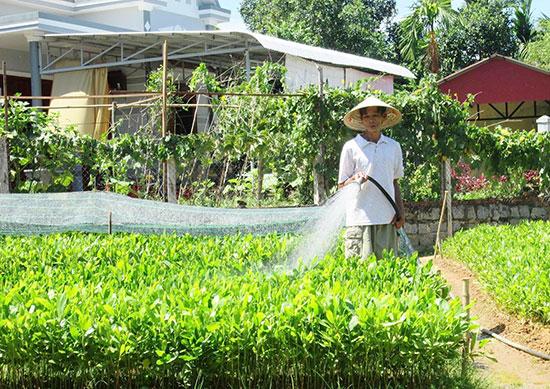 Mô hình ươm cây giống lâm nghiệp giúp nhiều hộ dân ở xã Quế An có nguồn thu nhập cao. Ảnh: VĂN SỰ