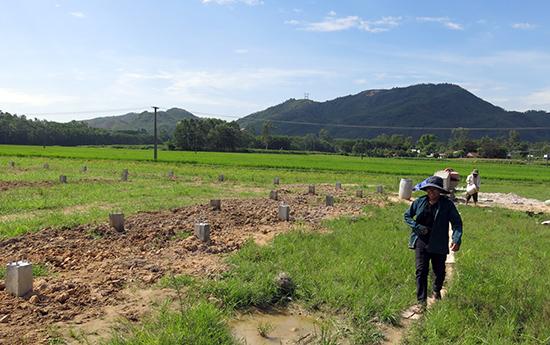 Dự án rau sạch áp dụng công nghệ cao của HTX Duy Sơn là một trong những dự án đang tìm cách tiếp cận với những cơ chế ưu đãi từ Nghị định 57. Ảnh: T.D