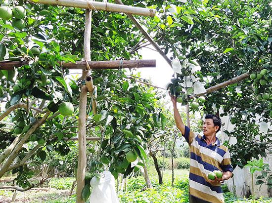 Vườn cây ăn quả của ông Nguyễn Hạt cho thu nhập vài trăm triệu đồng mỗi năm. Ảnh: T.NHAN