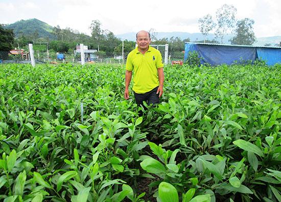 Cơ sở ươm cây giống lâm nghiệp của ông Nguyễn Ngọc Vui ở thôn Thắng Tây (Quế An, Quế Sơn) đạt doanh thu 1,5 - 1,8 tỷ đồng/năm. Ảnh: V.SỰ