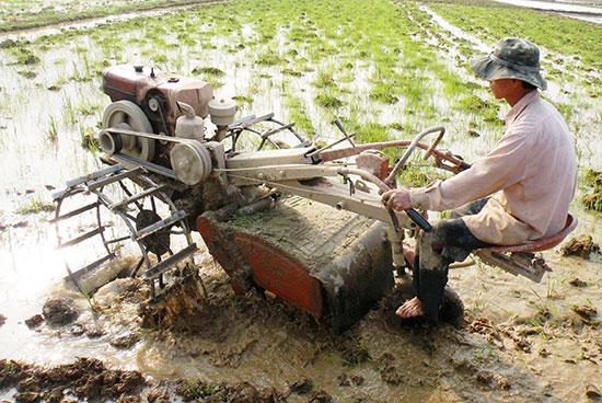 Cơ giới hóa trong sản xuất lúa ở huyện Thăng Bình. Ảnh: QUANG VIỆT