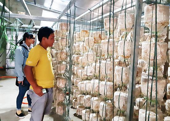 Nguyễn Sư Dũng bên mô hình nhà ươm trồng nấm sản xuất theo quy trình khép kín. Ảnh: TR.NHAN