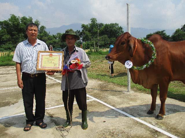 Trao giải cho những chú bò đẹp, khỏe đạt các tiêu chí do ban tổ chức đưa ra. Ảnh: N.DUY