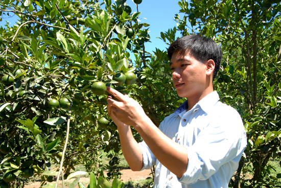 Vườn trái cây 4ha của anh Hiệp đang cho thu hoạch mùa đầu tiên. Ảnh: HỒ QUÂN