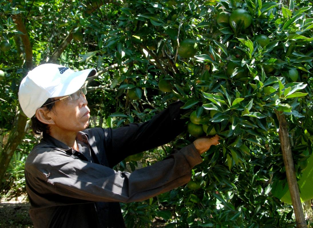 Người dân xã Hiệp Thuận tập trung cải tạo vườn tạp, xây vườn kiểu mẫu. Ảnh: H.Q