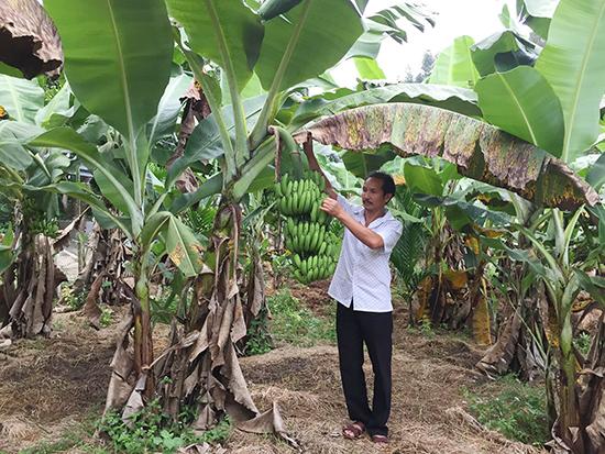 Cải tạo vườn tạp, xen canh thêm nhiều loại cây mang lại hiệu quả kinh tế cao hơn được người dân thôn Hội An hửng ứng nhiệt tình.