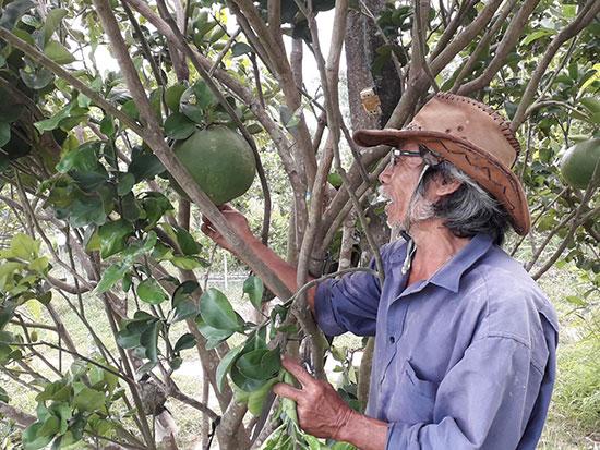Lão nghệ nhân Phan Quang Tám có thu nhập hơn 500 triệu đồng mỗi năm từ kinh tế vườn. Ảnh: P.PHƯƠNG