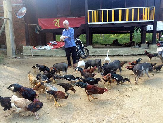 Mô hình nuôi gà thả vườn và heo đen đem lại hiệu quả kinh tế khá cao.