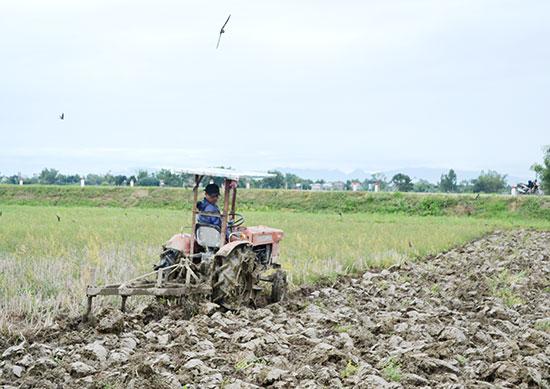 Máy cày được các xã, phường huy động cày đất ruộng canh tác lúa. Ảnh: C.T