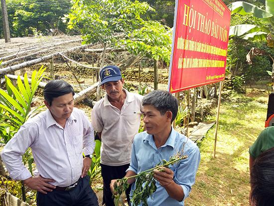 UBND và Hội nông dân thị trấn thường xuyên tổ chức các buổi hội thảo tại vườn để hướng dẫn kỹ thuật cho người dân.