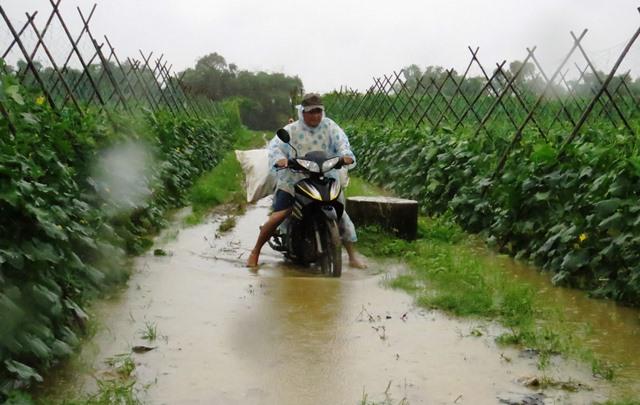 Đội mưa lớn chở nông sản. Ảnh: HOÀNG LIÊN