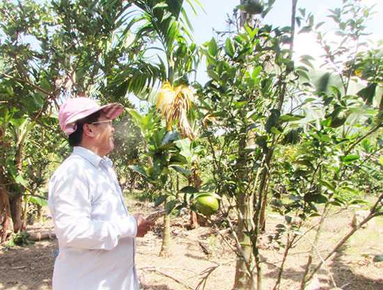 Ông Chung tại trang trại cây ăn trái.Ảnh : Văn Phin