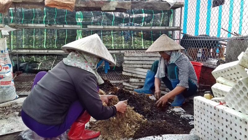 Nông dân làm đất trồng lại các loại rau như hành lá, ngò, cải mầm để vớt vát lại một ít vốn liếng. Ảnh: V. Đ
