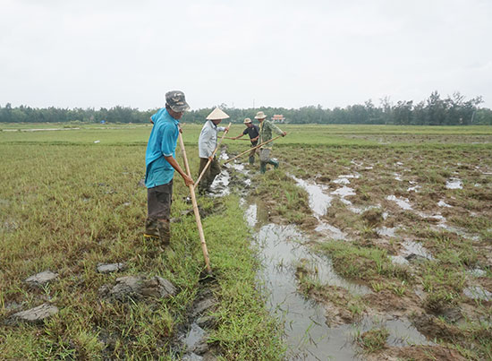 Nông dân thôn Bình Trúc 1 phá bỏ bờ ruộng để tham gia  mô hình tích tụ tập trung ruộng đất. Ảnh: G.B