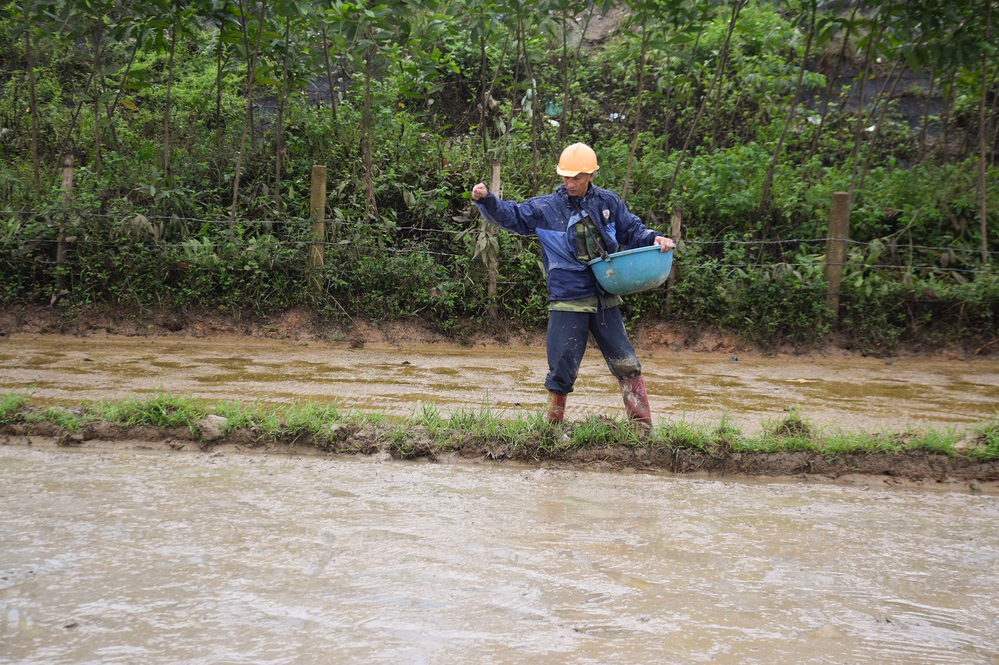 Nhiều nông dân xuống giống nhưng do gặp thời tiết mưa kéo dài. Ảnh: THANH THẮNG