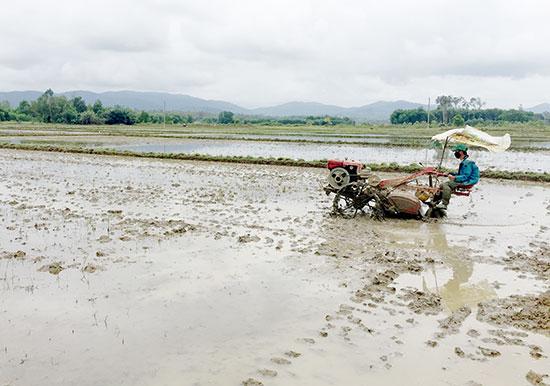 Thửa ruộng lớn thuận lợi đưa cơ giới hóa vào đồng ruộng. Ảnh: PHAN VINH
