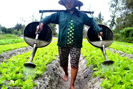 Bà Trương Thị Truyện chăm sóc rau sạch. Ảnh: QUANG VIỆT