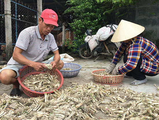 Ông Nguyễn Hà đang chuẩn bị kiệu chờ thương lái tới mua. Ảnh: K.L